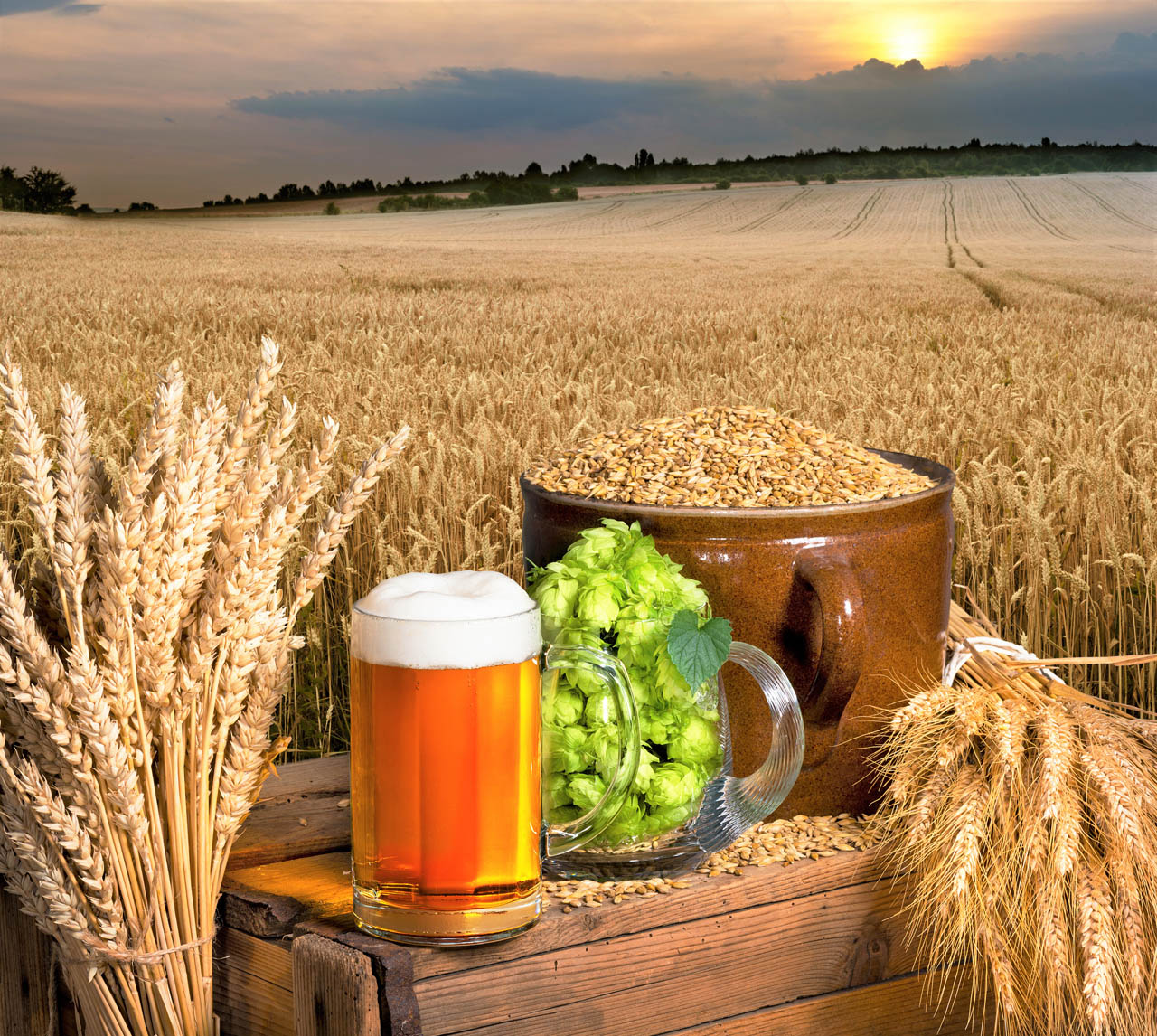 Beer ingredients dakota brewery beer pub best craft draft beer argyroupoli elliniko region - 4